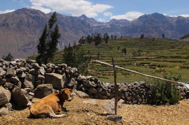 peruvian landscape photo