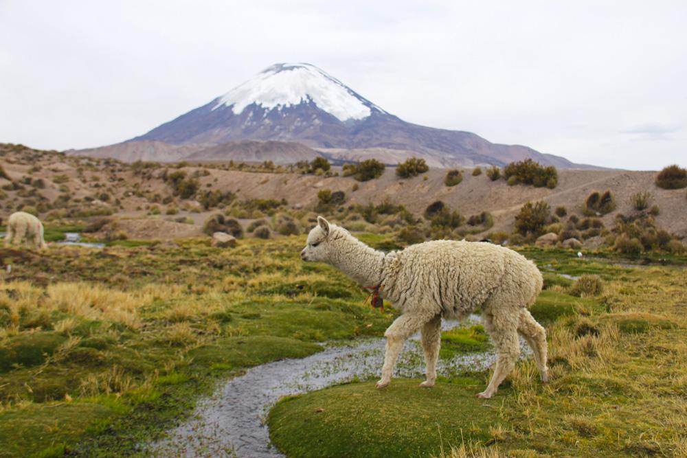 lauca national park